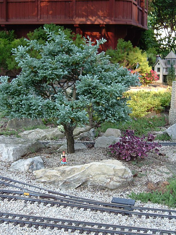 Trees for your trains choosing and cultivating dwarf for Small specimen trees