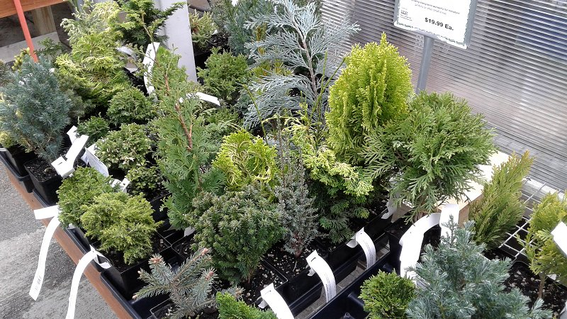 fairy garden plants work fine on garden railroads - Fairy Garden Plants