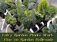 Fairy Garden Plants found at a local nursery will work great on garden railroads, too.  Click to go to article.