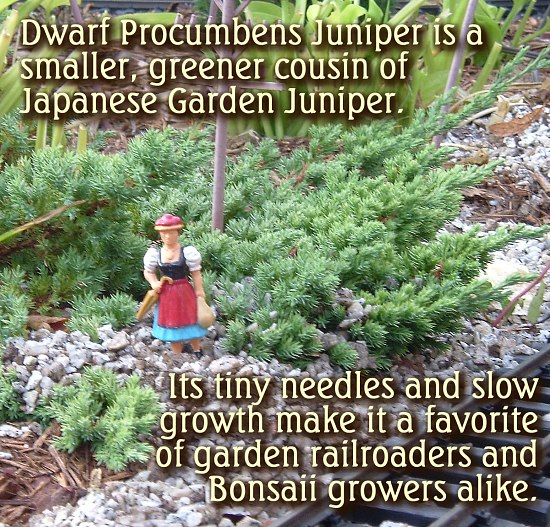 Tibet company poppies tapestry